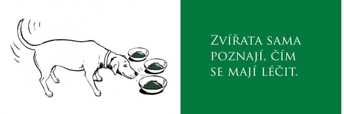 zoofarmakognozie